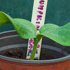 Mikrowellen Tipps für die Pflanzen