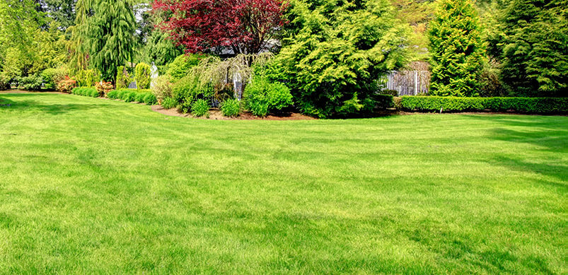 Gartenpflege im September