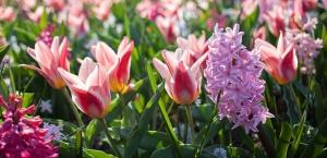 Tipps zur Gartenpflege im September
