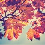 """""""Herbstputz"""" – Machen Sie Ihre Küche fit für den Herbst"""