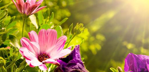 Füge Deinem Garten etwas Farbe hinzu